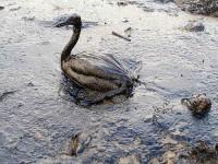 oil-spill-2