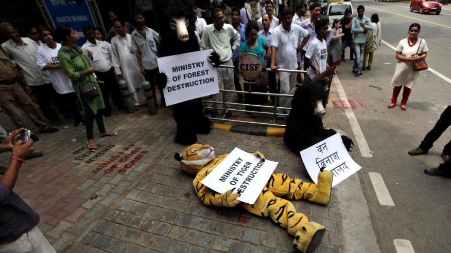 India Greenpeace Funds-1