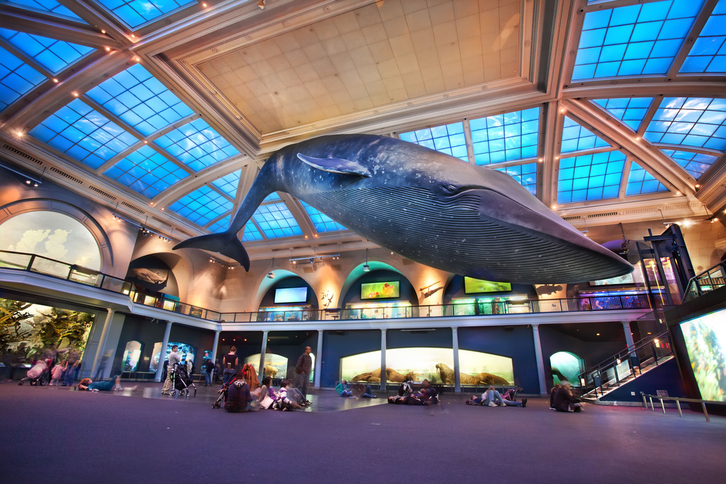 Explore-The-Natural-History-Museum-Of-New-York-City-5